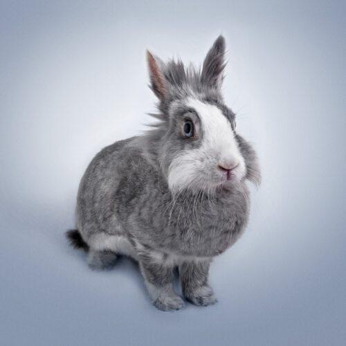 Dlaczego mój królik nie ma apetytu?
